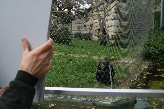 Den Affen meine Mappe zeigen, Aktion 2013 (Foto: Thomas Stüssi)